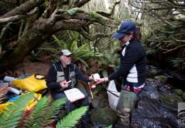50 Degrees South Trust, Campbell Island, invertebrate identification key